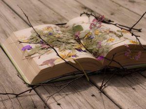 بهترین انتشارات برای چاپ کتاب رمان کجا است؟